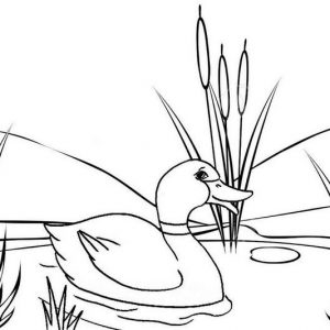 Mother Duck Looking for Baby Coloring Page