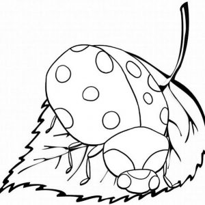 Ladybug insect over leaf coloring sheet from Baim