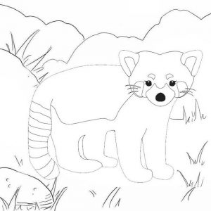 Acrobatic Red Panda Animal Coloring Page for Kids