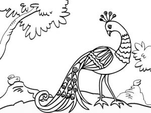 Beautiful Peacock Coloring Page for Kids