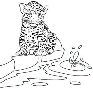 Jaguar and River Coloring Page