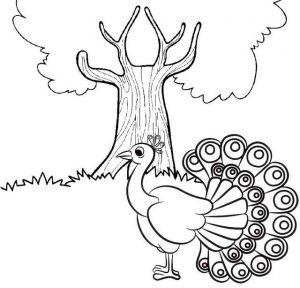 Peacock and a Tree Coloring Page