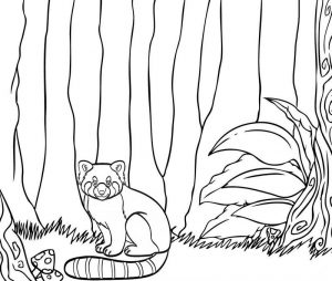Red Panda Stay in Trees Coloring Page