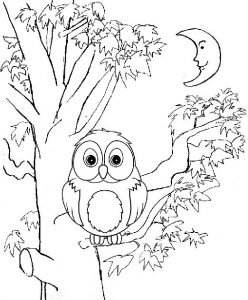 Best Owl Coloring Page for All Ages