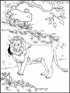 Lion in zoo Coloring Page