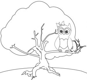 Pretty OWl in the tree coloring sheet