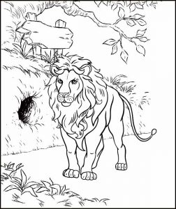 Single Lion Male Coloring Sheet