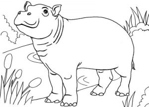 Top Hippo Standing Coloring Page